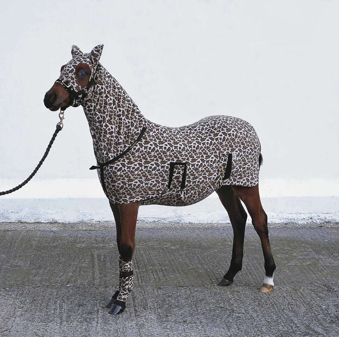 Animal Print Horse Rugs Rugs Ideas